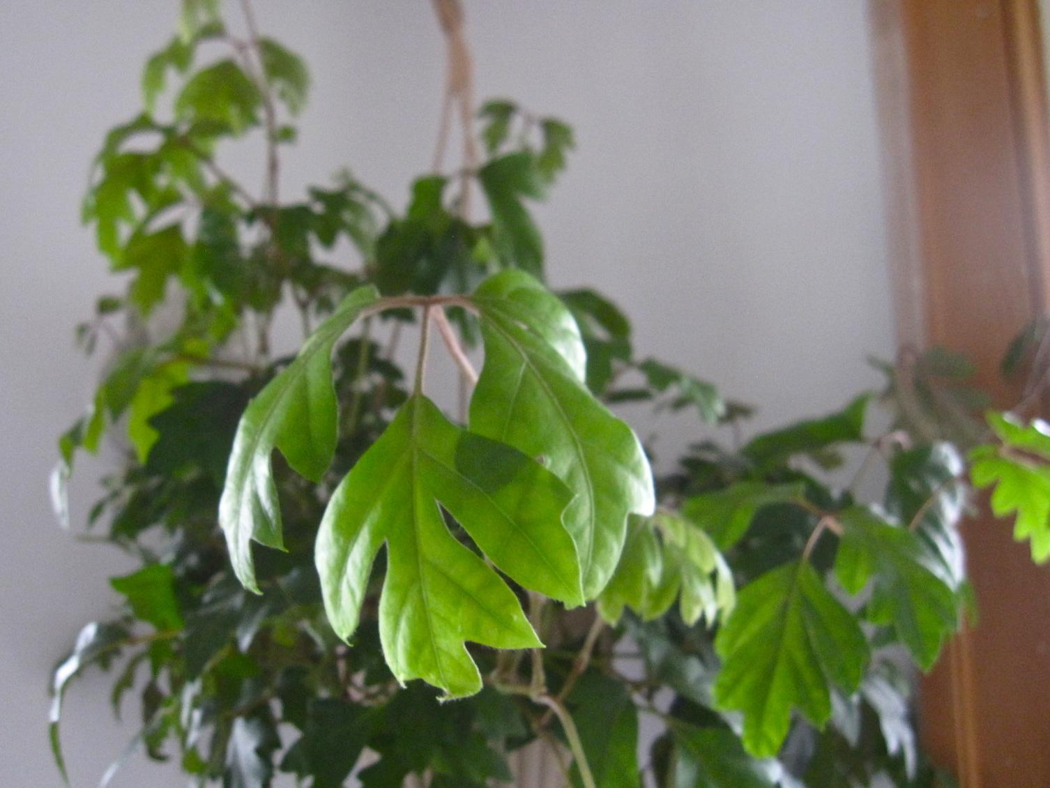 100 Houseplants For Low Light Indoor Plants Low